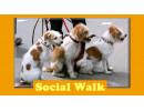Social_Walks